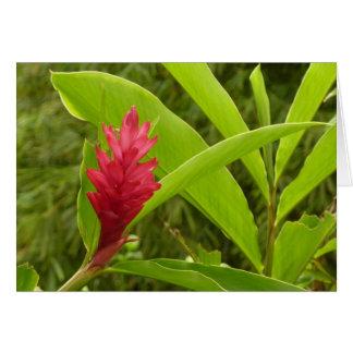 Flor I del jengibre rojo Tarjeta De Felicitación