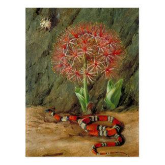 Flor Imperiale, Coral Snake and Spider, Brazil Postcard