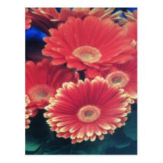 Flor inclinada blanco tarjetas postales