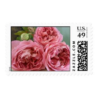 Flor inglesa del rosa de la herencia de los rosas sellos