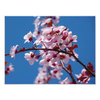 Flor japonés del cerezo cojinete