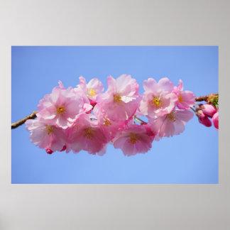 Flor japonesa rosada hermosa del flor del cerezo póster
