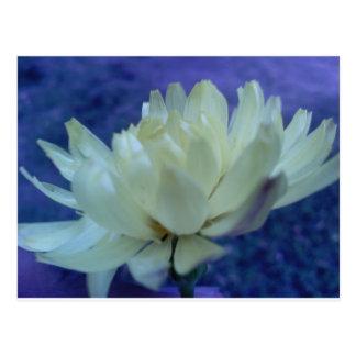 Flor.jpg Postcard