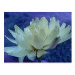 Flor.jpg Tarjetas Postales
