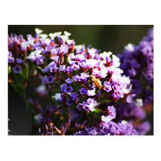 flor lavendar postal
