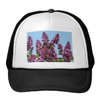 flor, lila púrpura gorro