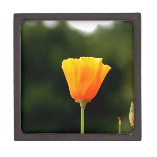 Flor macra anaranjada caja de recuerdo de calidad