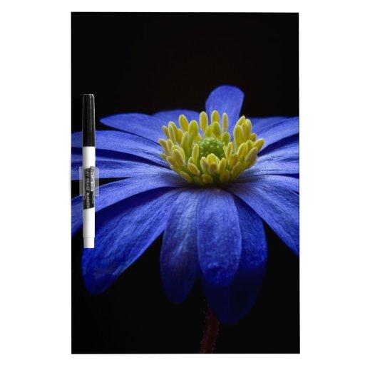 Flor macra azul pizarras blancas de calidad