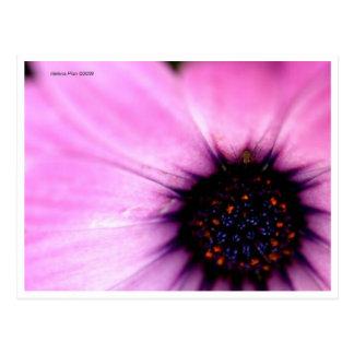 Flor macra del rosa de la foto con la postal del i