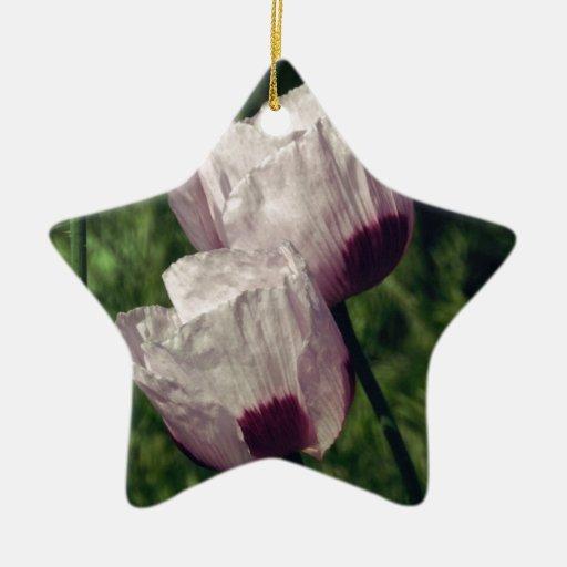 Flor macra maravillosa adorno navideño de cerámica en forma de estrella