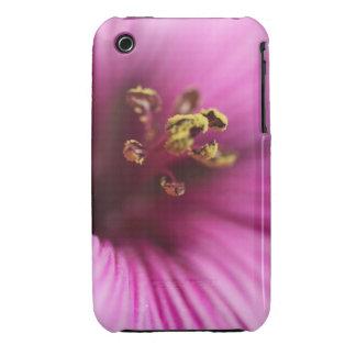 Flor macra rayada rosada iPhone 3 cárcasas
