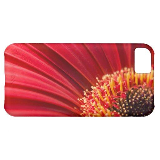 Flor macra roja de la margarita del Gerbera