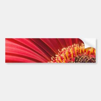 Flor macra roja de la margarita del Gerbera Pegatina De Parachoque