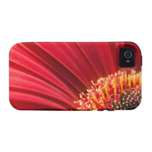Flor macra roja de la margarita del Gerbera iPhone 4 Carcasa