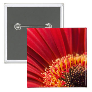 Flor macra roja de la margarita del Gerbera Pins