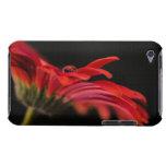 Flor macra roja del Gerbera iPod Case-Mate Protectores