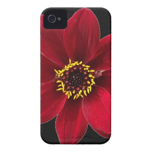 Flor macra roja iPhone 4 coberturas