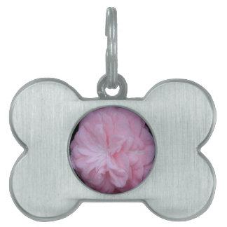 Flor macra rosada de Camelia Placas De Mascota