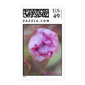 Flor macro elegante de la foto de la bella arte envio