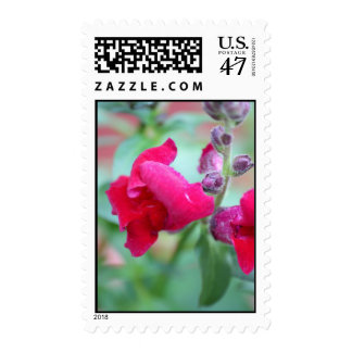 Flor magenta rosada oscura de Snapdragon Sellos Postales