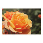 Flor magnífica del rosa amarillo. Foto floral Art. Impresiones En Madera