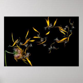 Flor - margarita - ida con el viento póster