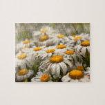 Flor - margarita - no muy fresca como margarita puzzle con fotos