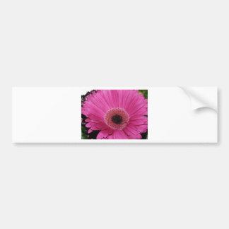 flor, margarita rosada del gerber etiqueta de parachoque