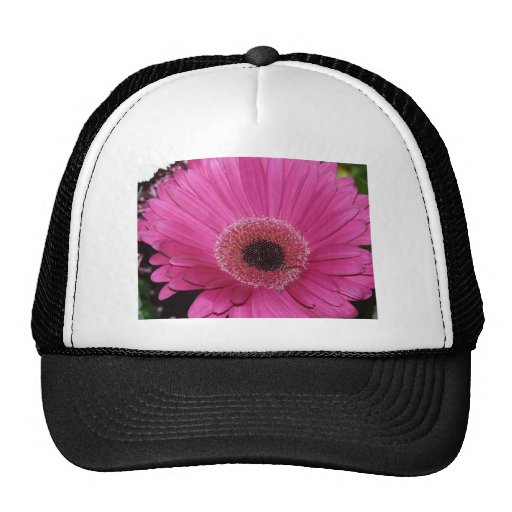 flor, margarita rosada del gerber gorros