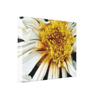 Flor - margarita - sol borracho impresion de lienzo