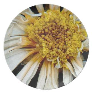 Flor - margarita - sol borracho plato para fiesta