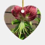 Flor marrón verde del jardín del lirio ornatos