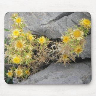 Flor mediterránea espinosa tapete de ratones