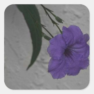 Flor mexicana de la petunia calcomanías cuadradas personalizadas