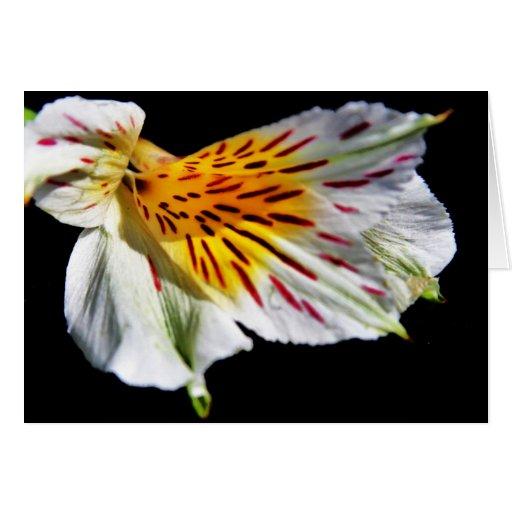 """flor misteriosa"" por Larry Coressel Tarjeta De Felicitación"