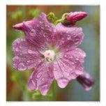 Flor mojada de goteo impresion fotografica