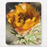 Flor Mousepad de Staghorn Cholla Tapetes De Ratón