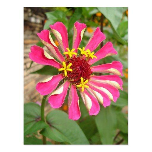 Flor multicolora * postal