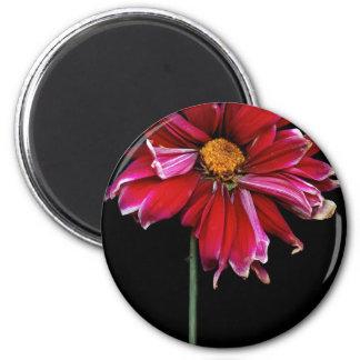 Flor - mún día del pelo imán para frigorifico
