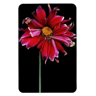 Flor - mún día del pelo imán rectangular