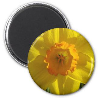 flor, narciso imán redondo 5 cm