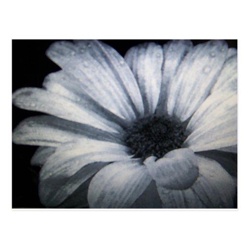 flor negra y blanca postal