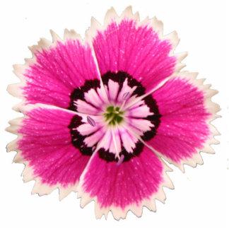 flor No-lilting de la solapa Escultura Fotográfica