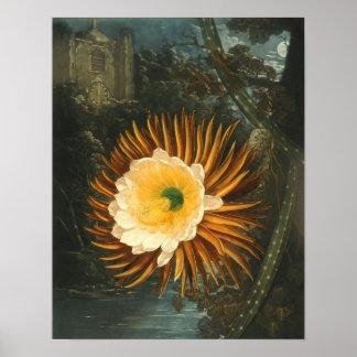 Flor Noche-Floreciente Thornton del vintage del ci Poster