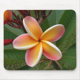 Flor Oahu Hawaii del Plumeria Tapetes De Ratones