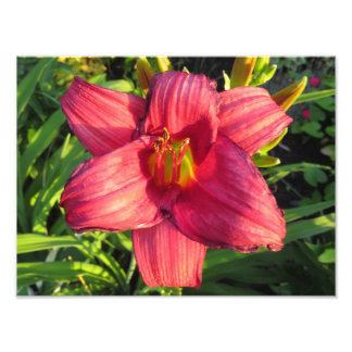 Flor oriental roja del lirio de día sobre la hora arte con fotos