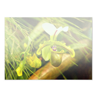 Flor - orquídea - insigne del Paphiopedilum Invitacion Personal
