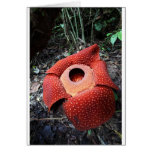 Flor parásita de Rafflesia Felicitaciones