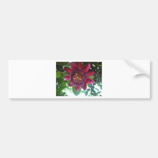 flor, passionflower púrpura pegatina para auto