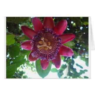 flor, passionflower púrpura felicitacion